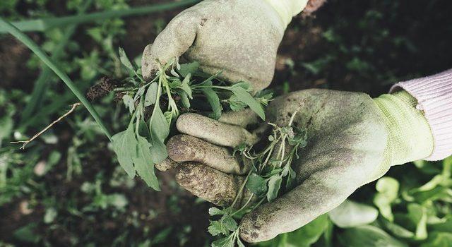 Les bienfaits que procurent le jardinage